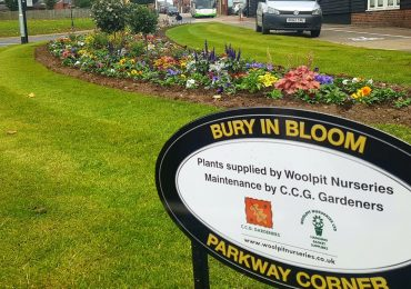 Commercial garden maintenance for Bury In Bloom street bed by CCG Gardeners Bury St Edmunds