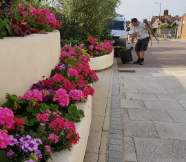 Commercial garden services street planters maintained by CCG Gardeners at The Arc, Bury St Edmunds