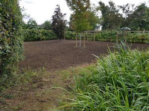 New tree planting service in garden in Cockfield, Suffolk