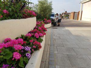 Regular gardener maintenance of 'In Bloom' planters in The Arc, Bury St Edmunds