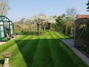 Lawn stripes after mowing by CCG Gardeners in Bury St Edmunds, Suffolk