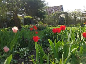 Spring bulbs planted by CCG Gardeners in Bury St Edmunds, Suffolk