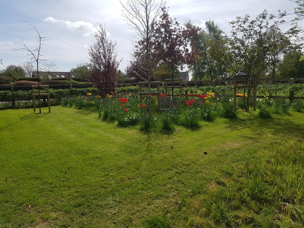 Trees, bedding and lawn planted in Cockfield garden