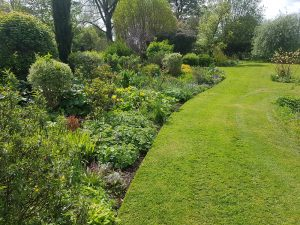 Regular garden maintenance service - near Bury St Edmunds