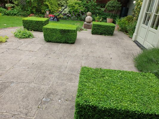 Topiary shrubs and quality hedge trimming