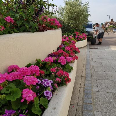 commercial street planters at The Arc in Bury St Edmunds