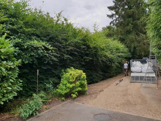 hedge cutting service