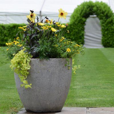 special occasion garden tidy, wedding party garden